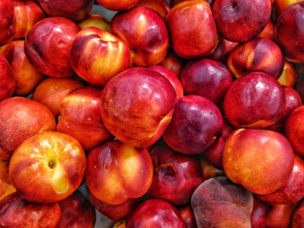 世界一ビタミンC含有量の多いスーパーフルーツ「カムカム」とは