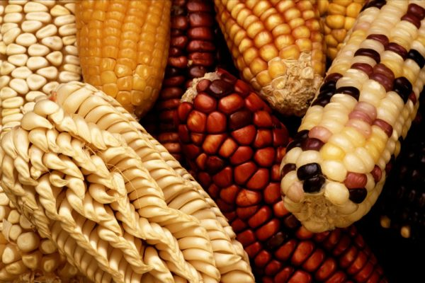 日本は遺伝子組み換え大国?知らず知らずのうちに食べている不自然な食品