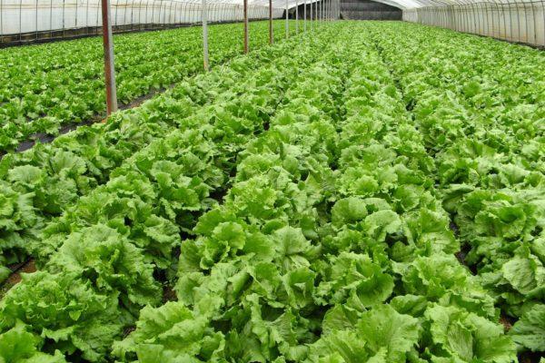 自然栽培の食事が体内に蓄積した農薬や有害物質の排出力を高める