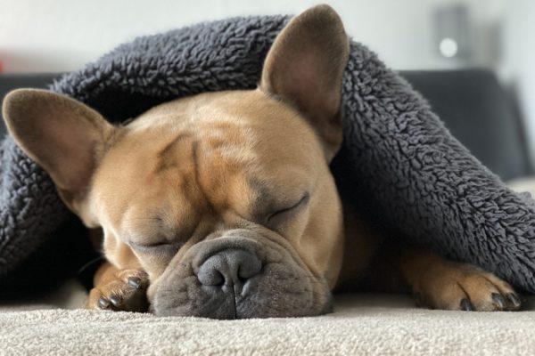 良い睡眠が生産性を高める!良質な睡眠のためにできる簡単な方法