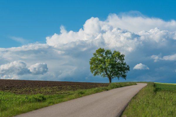 自然栽培と有機栽培は違うの?地球環境にも人の健康にも優しい農作物とは