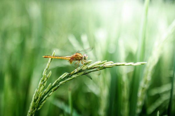 毎日食べているお米に残留農薬の危険性?玄米は特に注意