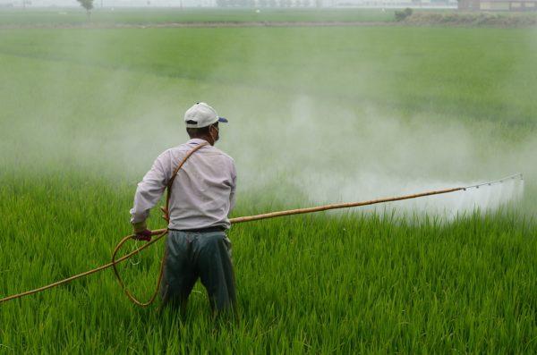 野菜と果物の残留農薬2021ランキング!残留農薬の摂取を減らそう